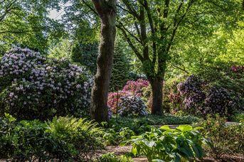 Rhododendronpark im Park der Gärten