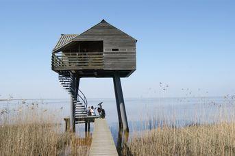Tagesausflug - Rund um den Dollart am Weltnaturerbe Wattenmeer!