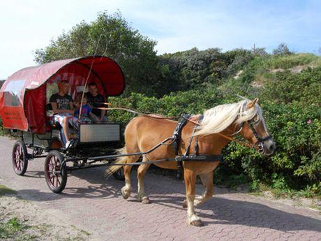 Ein Pferd zieht eine Familie in einer Kutsche auf Baltrum