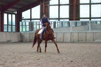 Pferdegerechte Ausbildung