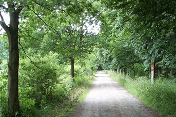 Wanderwege im Upjeverschen Forst