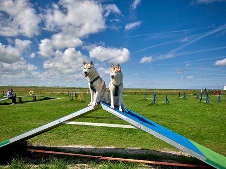 Hundeschulen und Agility Parks