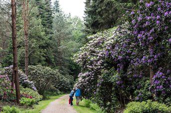 Tour 09: Unterwegs zu den drei großen Rhododendronparks