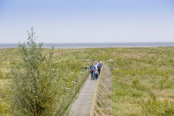 UNESCO Weltnaturerbe Wattenmeer - barrierearmer Salzwiesenlehrpfad