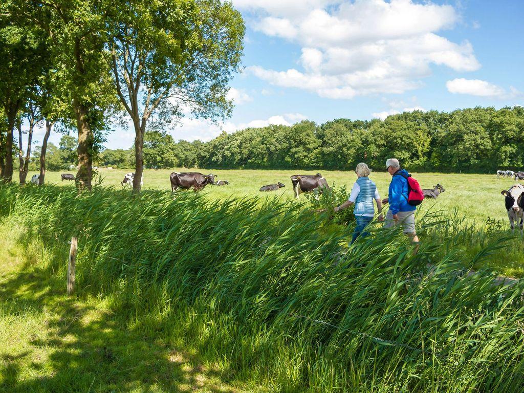 Ein Paar wandert auf einem Wanderweg durch Ostfriesland entlang einer Weide mit Kühen