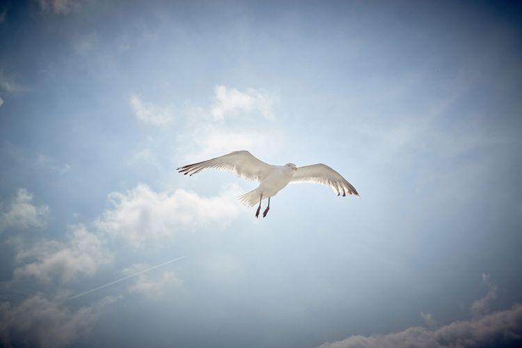 Zugvögel in Ostfriesland