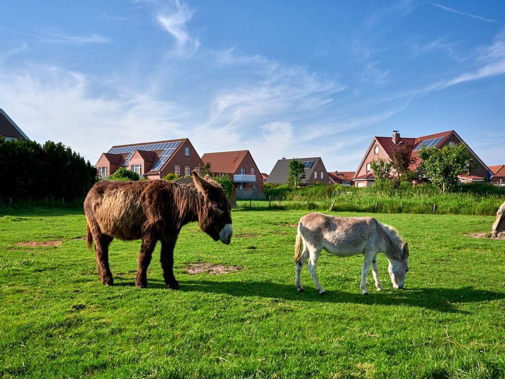 Tiere auf einer Weide im Haustierpark in Werdum