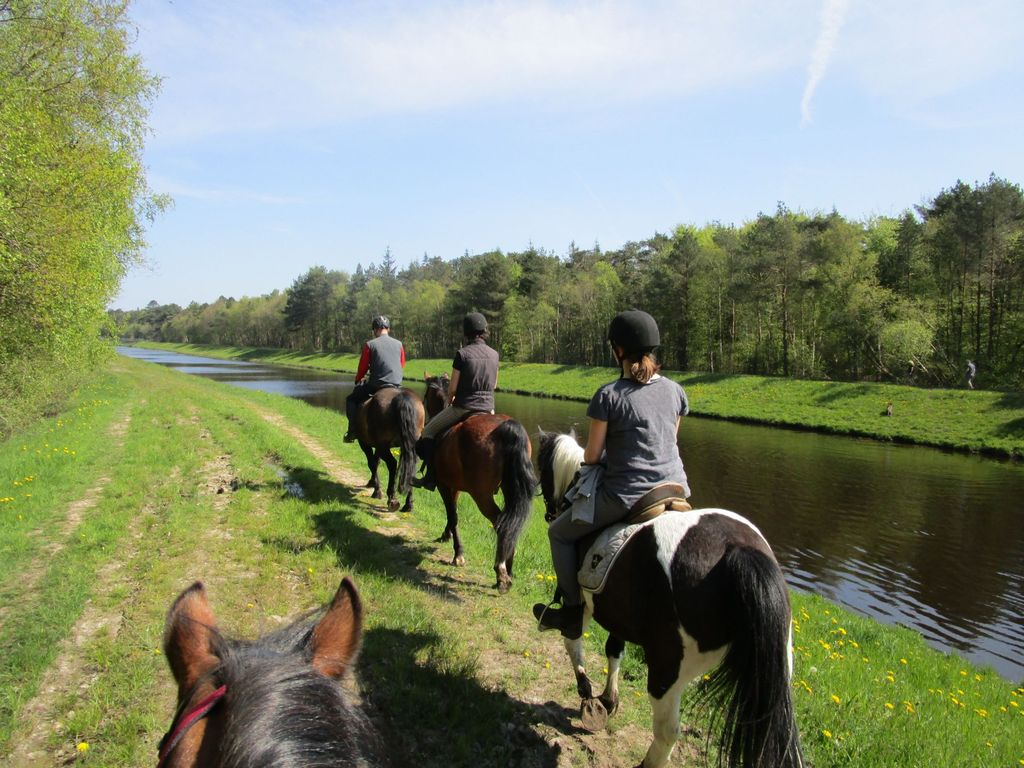 Eine Gruppe Reiter auf einer Pferdewanderung in Holtgast am Tief