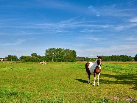 Ein Pferd steht auf einer Weide bei Sonnenschein und blauem Himmel