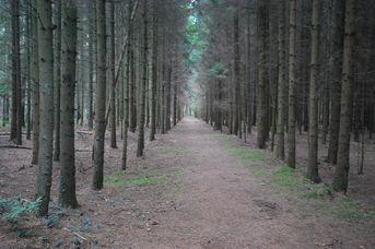 Wald- und Heidegebiet Hollesand