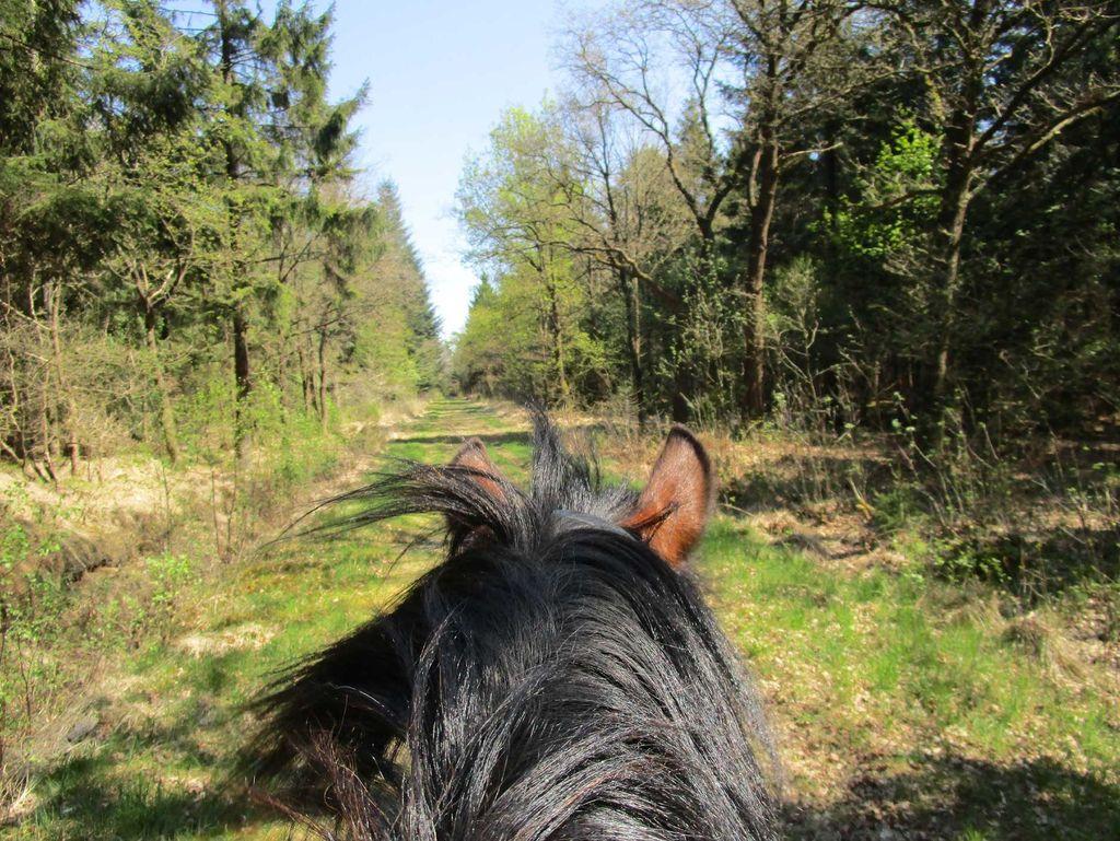 Ausflug mit dem Pferd bei Holtgast Ostfriesland