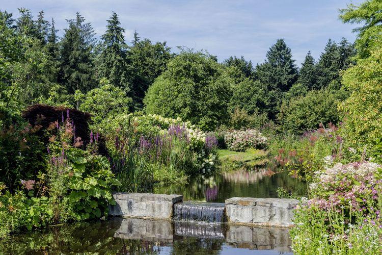 Verschiedene Arten und Sorten von Rhododendren und Freiland-Azaleen im Park in Gristede