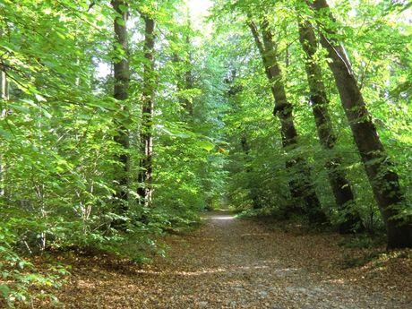 Blick in den grünen Wald bei Grossheide