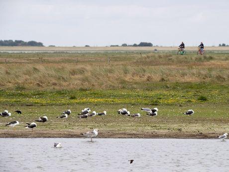 Zugvögel im Wattenmeer Ostfriesland
