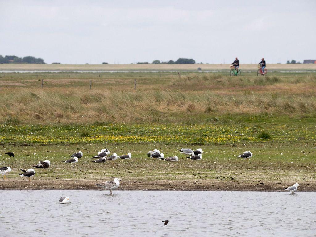 Zugvögel im Wasser am Wattenmeer mit Fahrradfahrern im Hintergrund