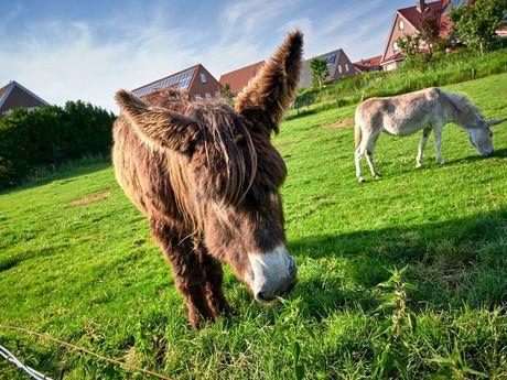 Esel im Haustierpark in Werdum