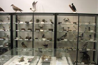 Ornithologische Ausstellung im Schloss Neuenburg