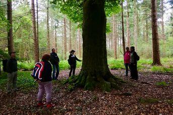 Waldführungen im Heseler Wald