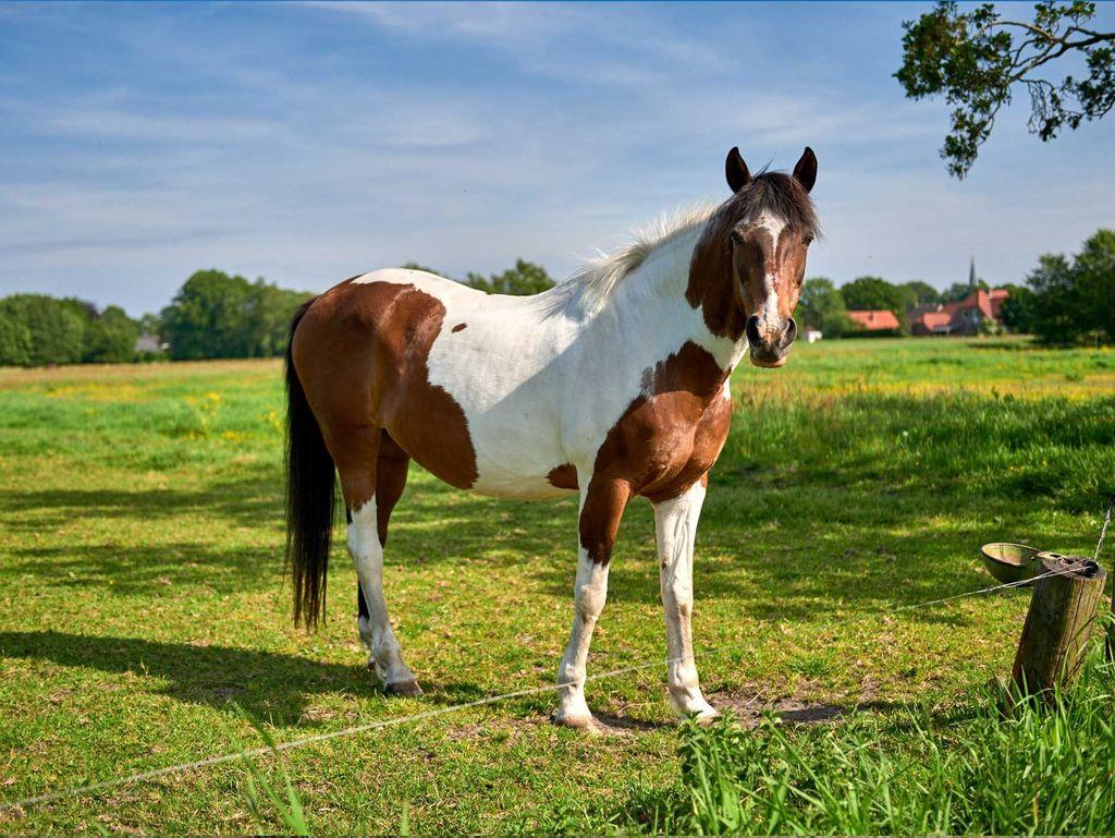 Ein Pferd steht auf einer grünen Weide in Ostfriesland