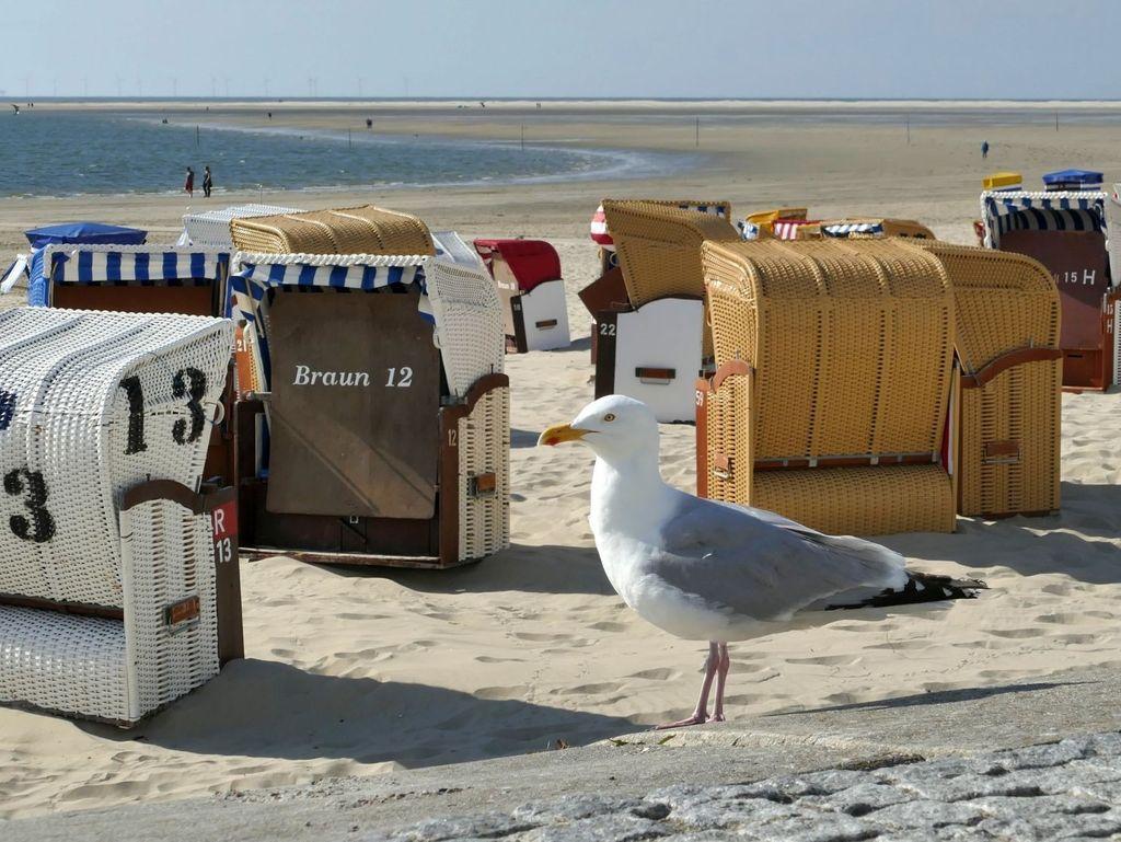 Möwe vor Strandkörben am Strand von Borkum