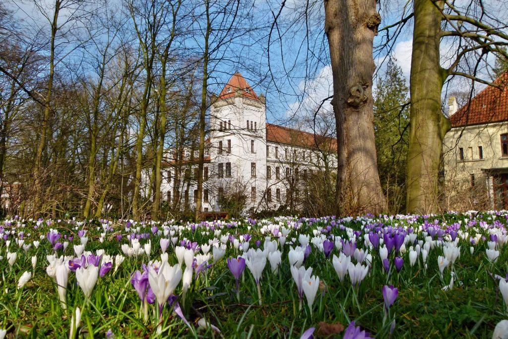 Blumenwiese vor dem Schloss in Aurich