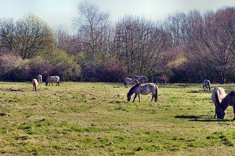 """""""Erlebnisausflug"""" für Kids - Einblicke in das Leben von Wildpferden"""