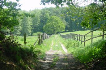 Nordic Walking Park Dammer Berge - Route 7 Bexaddetalroute