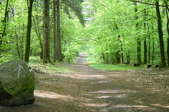 Nordic Walking Park Dammer Berge - Route 8 Hünensteinroute
