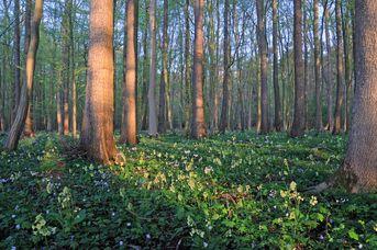 """Naturschutzgebiet """"Mansholter Holz"""""""