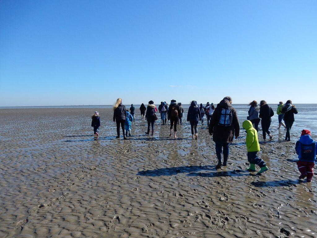 Eine Gruppe auf einer Wattwanderung im Watt von Ostfriesland