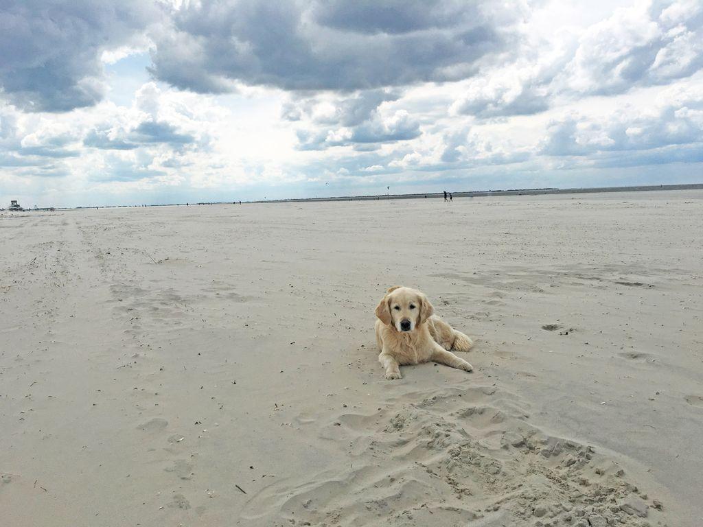 Ein Hund liegt am leeren Strand von Langeoog im Sand