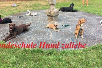 Hundeschule Hund zuliebe