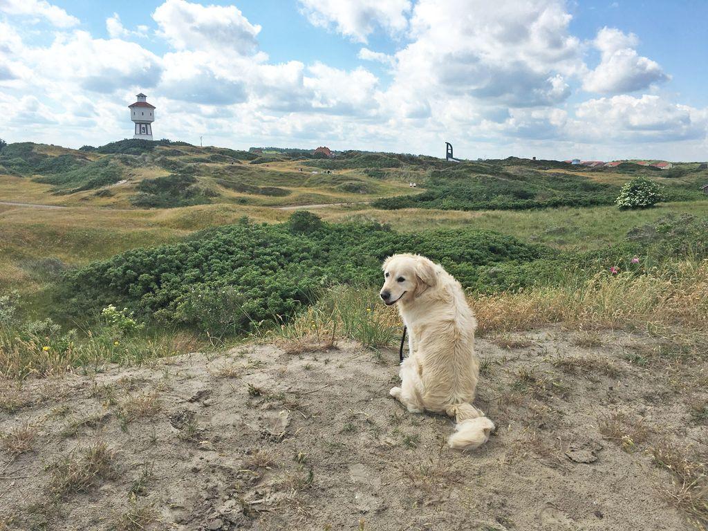 Urlaub mit dem Hund auf Langeoog