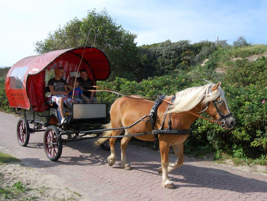 Ein Pferd zieht Kutsche mit Personen auf Baltrum