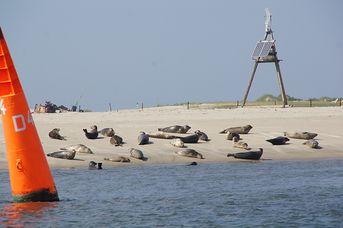 Zu den Seehundsbänken im Nationalpark Wattenmeer