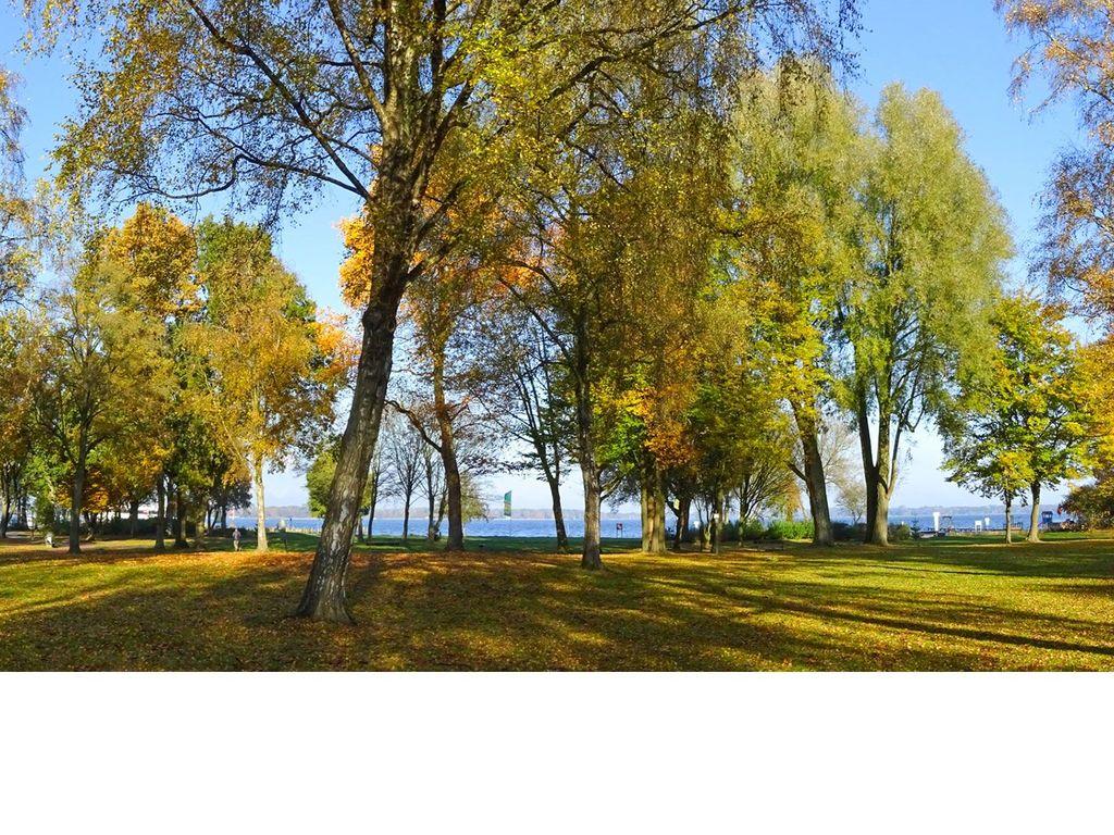 Herbstliche Bäume am Zwischenahner Meer in Bad Zwischenahn