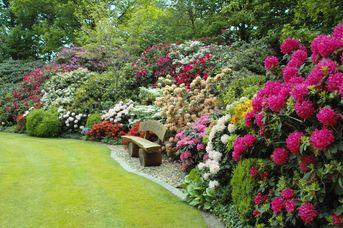 Rhodo-Garten Dringenburg