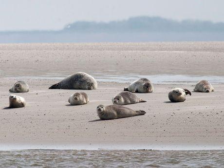 Typisch Wattenmeer