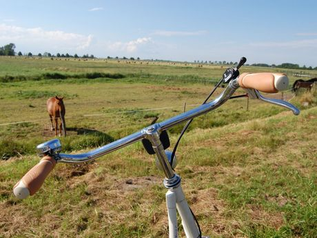Mit dem Fahrrad durch Weener, im Hintergrund sind Pferde auf einer Wiese
