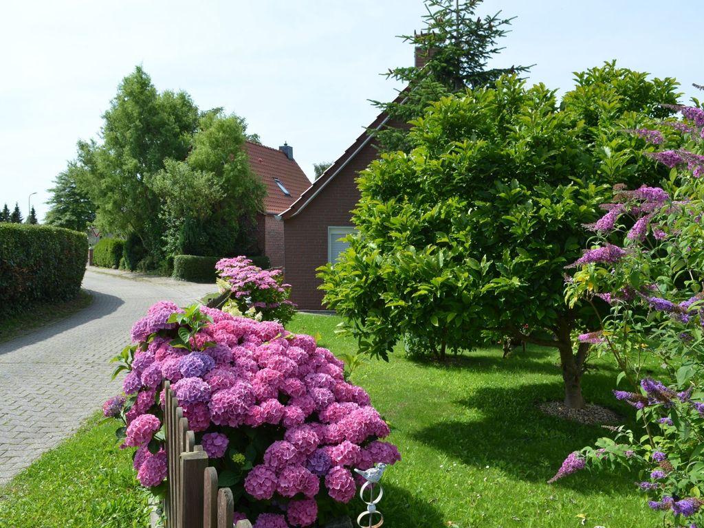 Rosa blühende Hortensie in einem Vorgarten in Hinte