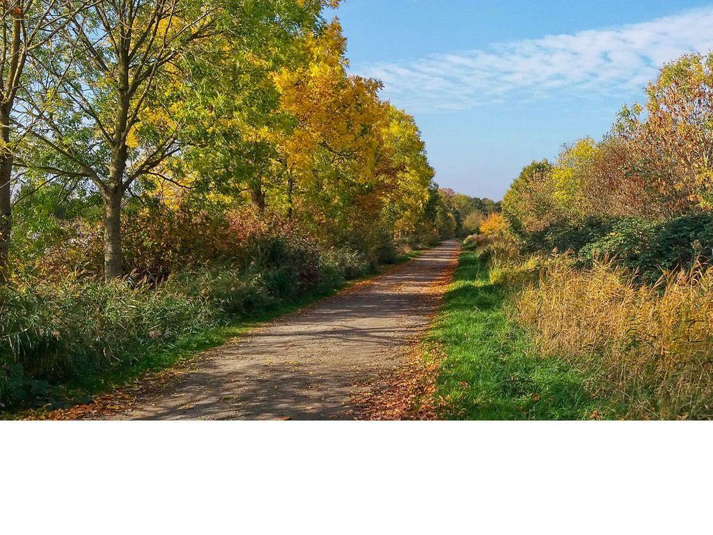 Bäume in Herbstlichen Farben an einem Weg bei Emden