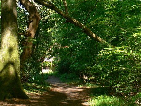 Bäume und Pfad im Bockhorner Urwald