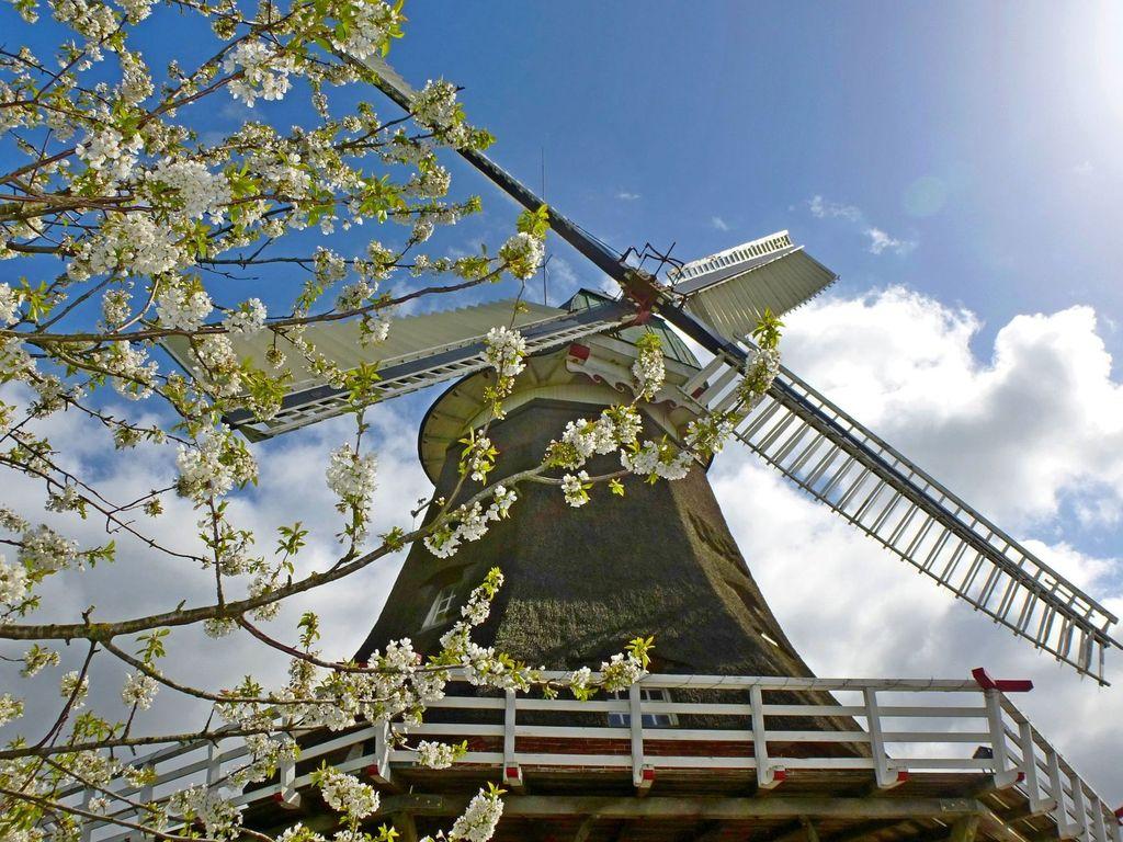 Die Bagbander Mühle im Frühling