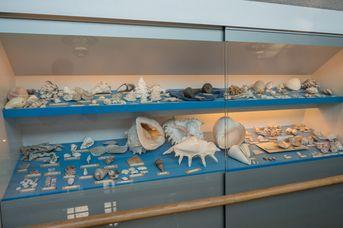 Kurioses Muschelmuseum