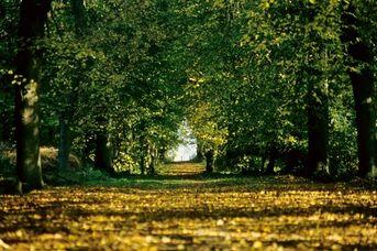Wanderbarer Forst