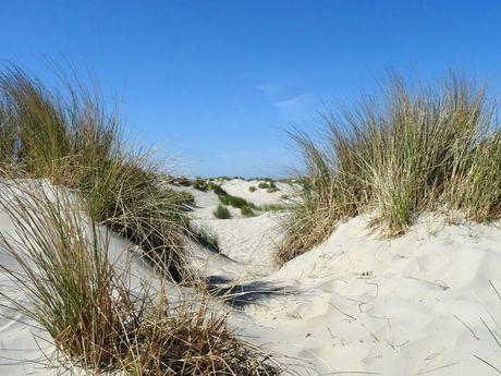 Sanddünen auf Borkum