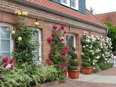 Bunte Rosensträucher an einem Gebäude in Horumersiel