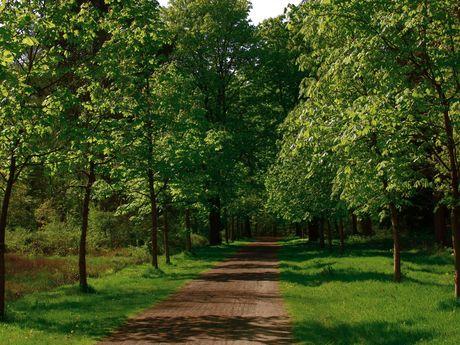 Eine grüne Kastanienallee im Schlosspark von Rastede