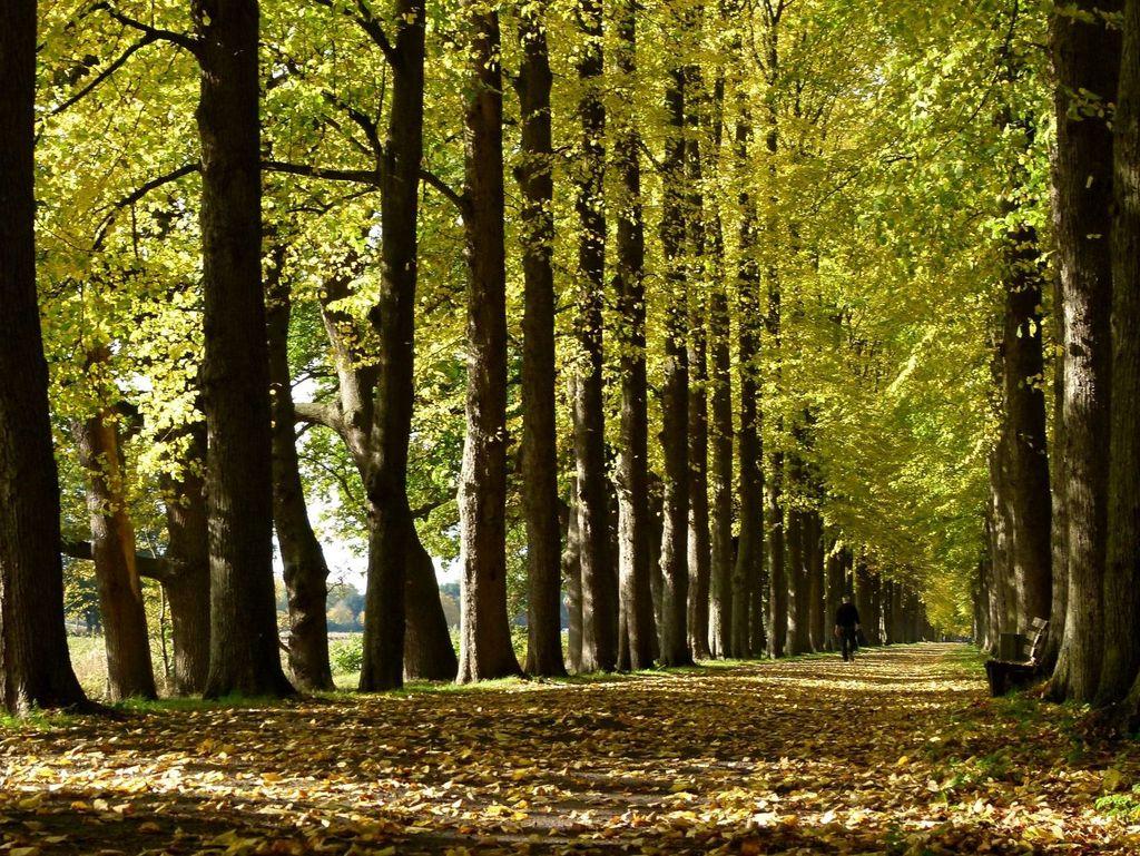 Laub auf dem Boden, bunte Blätter an den Bäumen der Allee an der Evenburg im Herbst