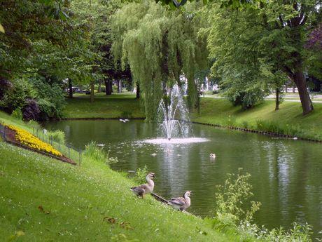 Enten im Schlossgraben rund um den Schlosspark von Jever